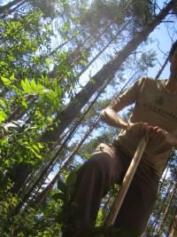 Biesenthal Waldrandbepflanzung